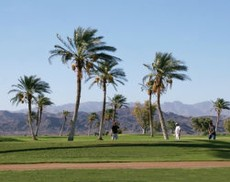 Lake Havasu Golf