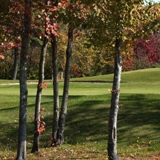 Spring-Meadows-Golf-Club.jpg